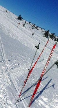 Skidor med hund.