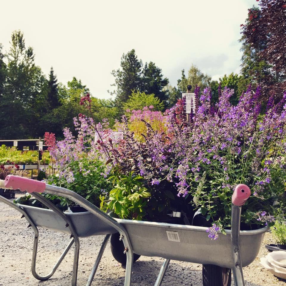 Trädgårdens dag på Ljungsleds Plantskola