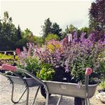 Trädgårdshelg på Ljungsleds Plantskola