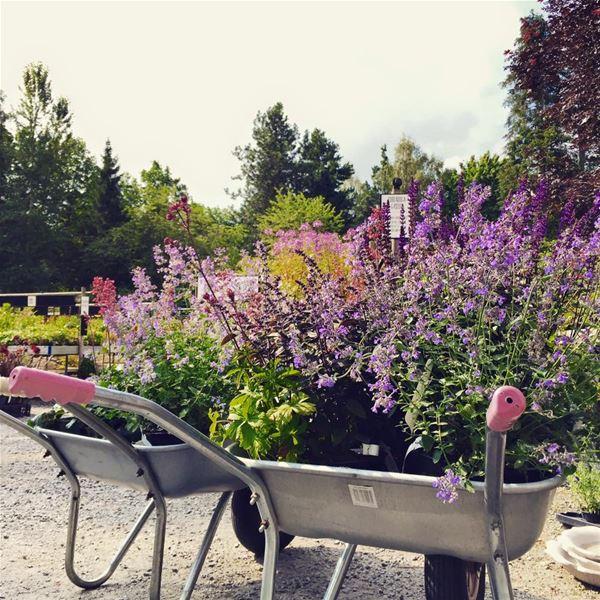 Garden day at Ljungsleds Plantskola