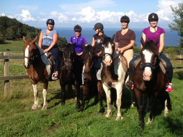 Westfield Hästsafari / Westfield Horse safari
