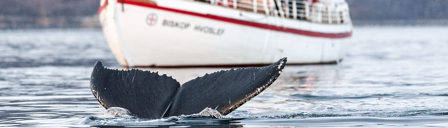 Scenic Whale Watching on Colin Archer boat - Tromsø Friluftsenter