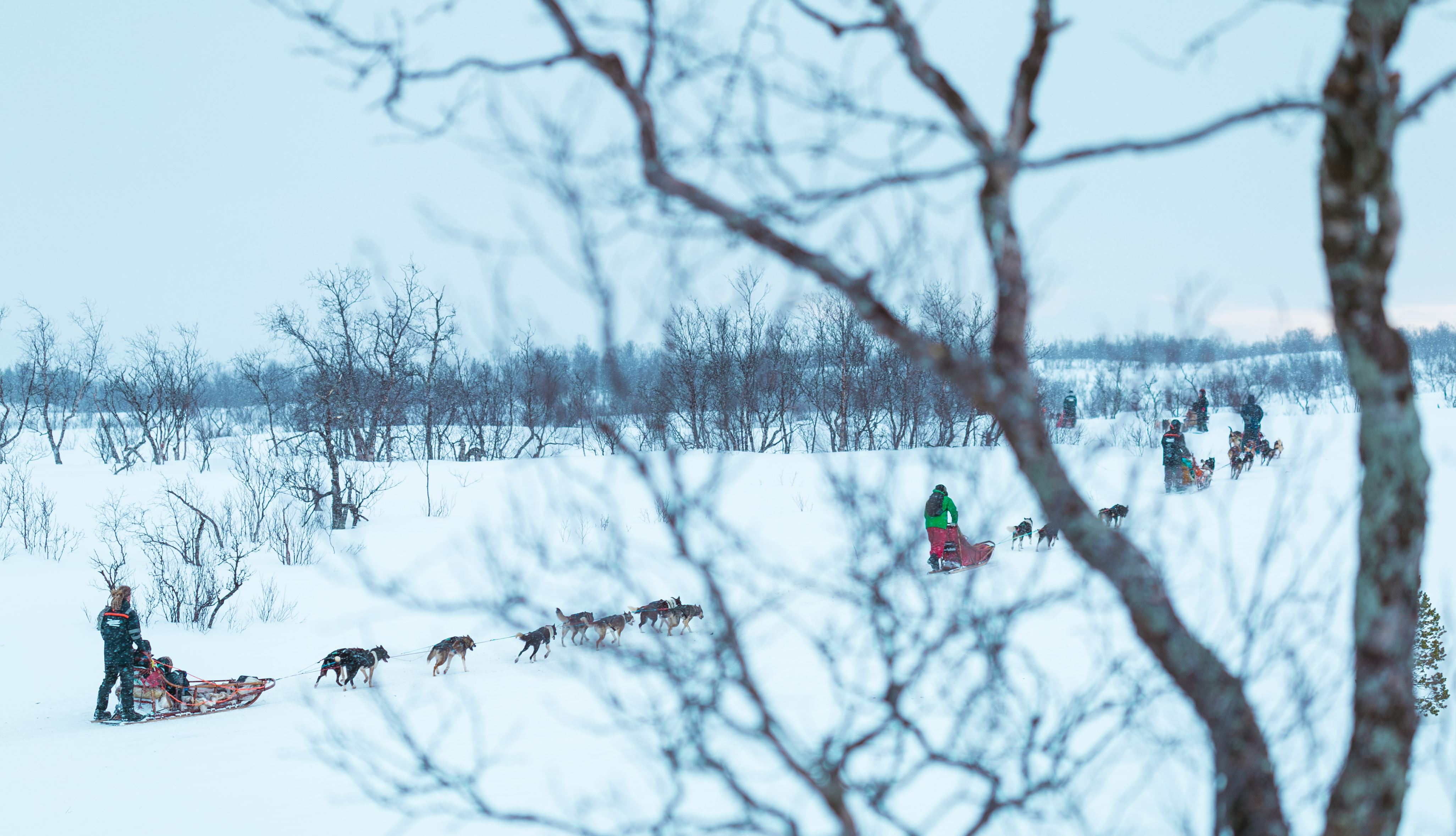 Two Days Dog Sledding Expedition – Tromsø Villmarkssenter