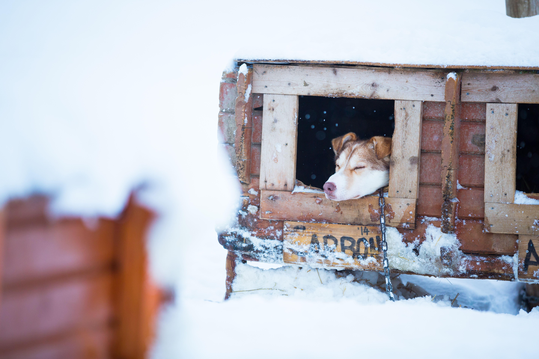 Dog Sledding with Sami Lunch – Daytime - Tromsø Villmarkssenter
