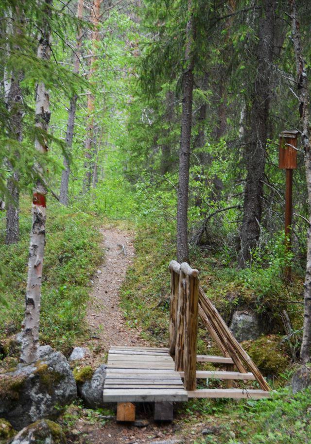 Hiking - Grivetjärnsberget