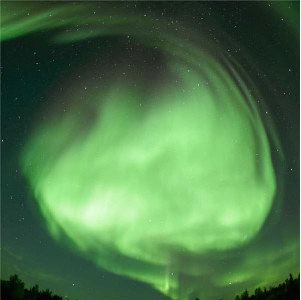 6-Day Tromsø and Senja Package - Whale Research Safari, Northern Lights and Reindeer Sledding - Wild Seas