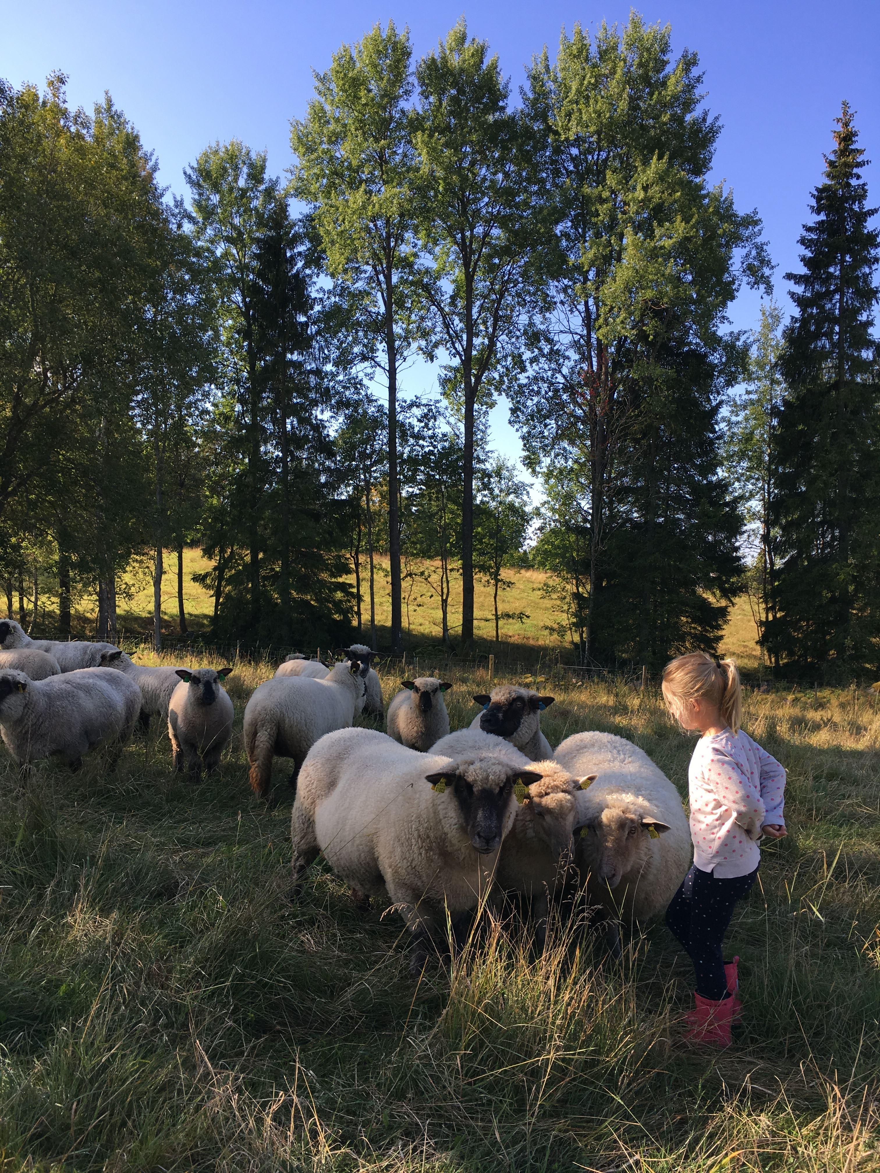 Gårdsbutiken i Topperyd bjuder in till höstmarknad