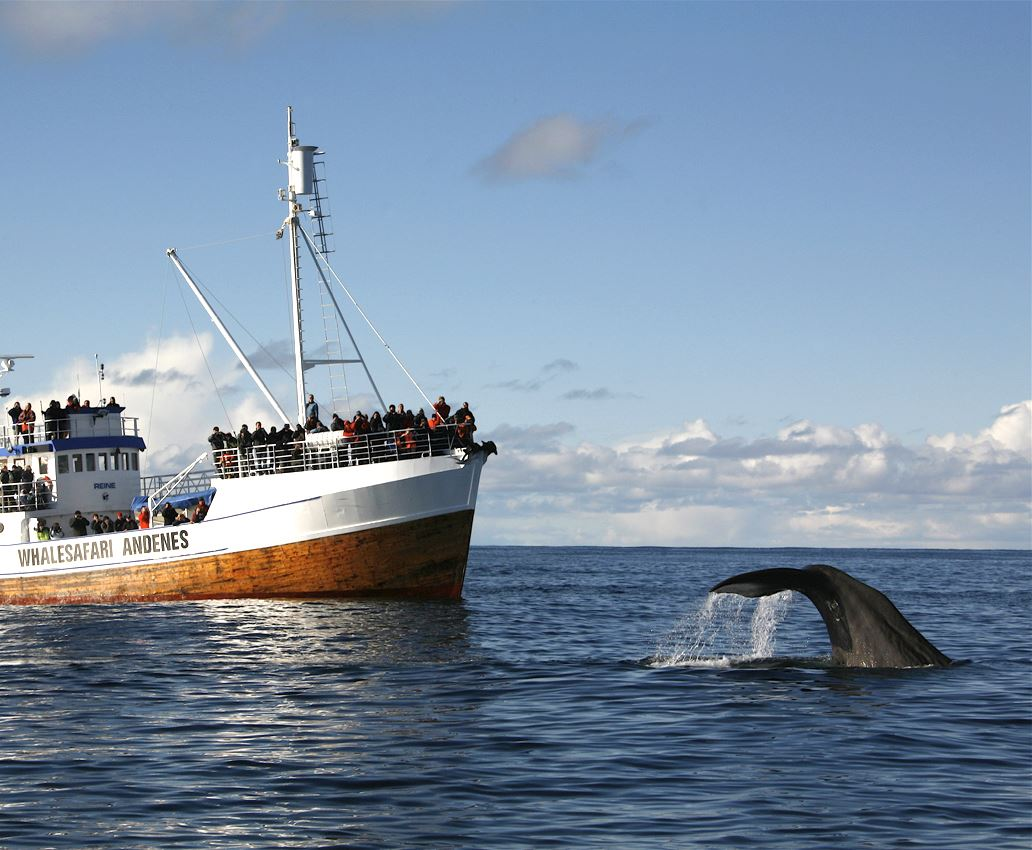 Whale safari from Andenes (Summer - big boat)