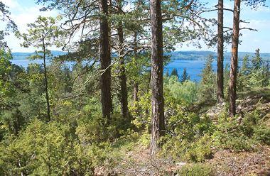 Sjövik naturreservat