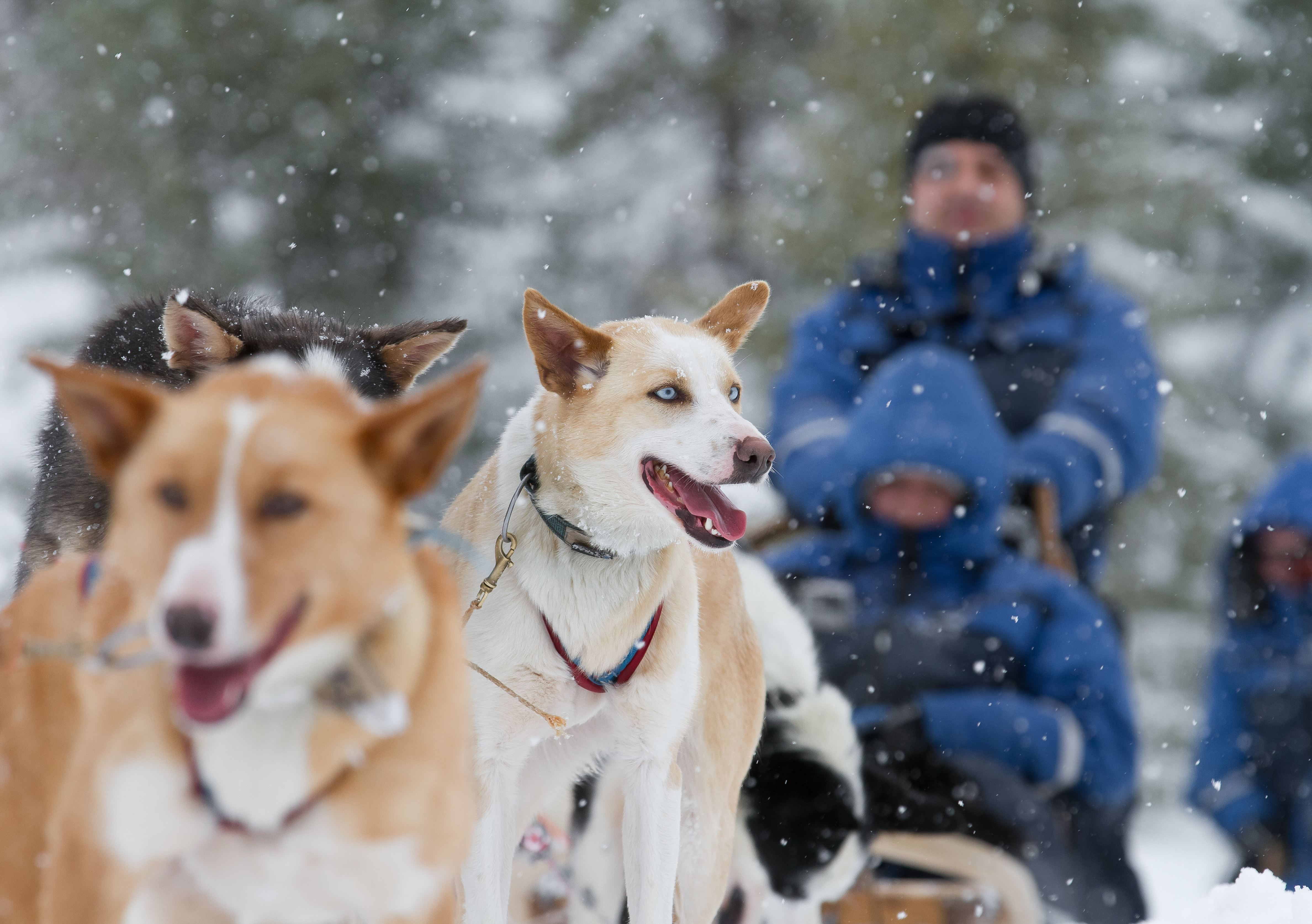 Dogsledding - Lyngsfjord Adventure