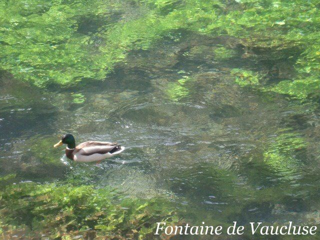 Fontaine de Vaucluse/Abbaye de Sénanque(photo stp)/Gordes/Roussillon/Bonnieux
