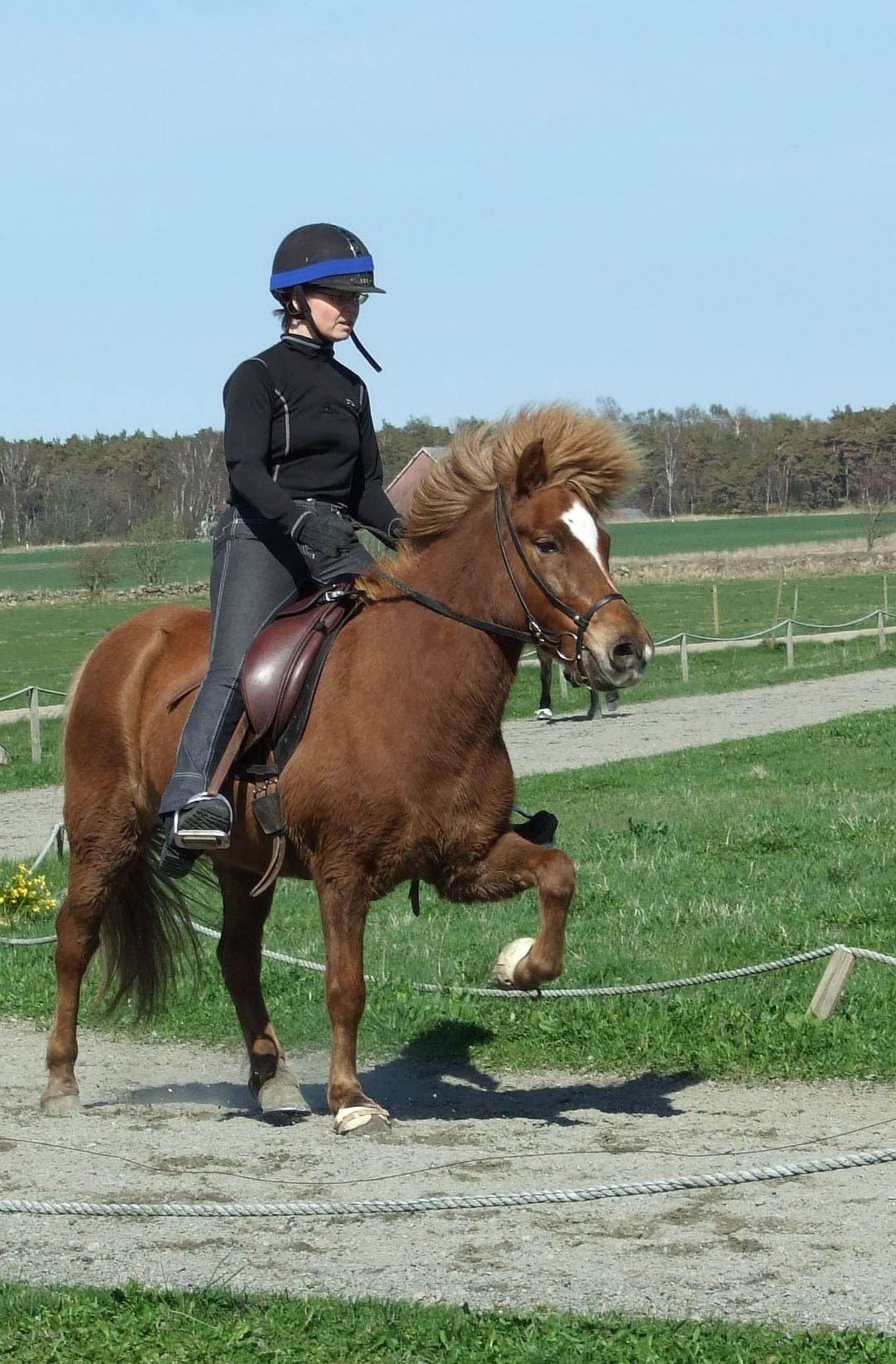 Spelmansgårdens Icelandic Horses