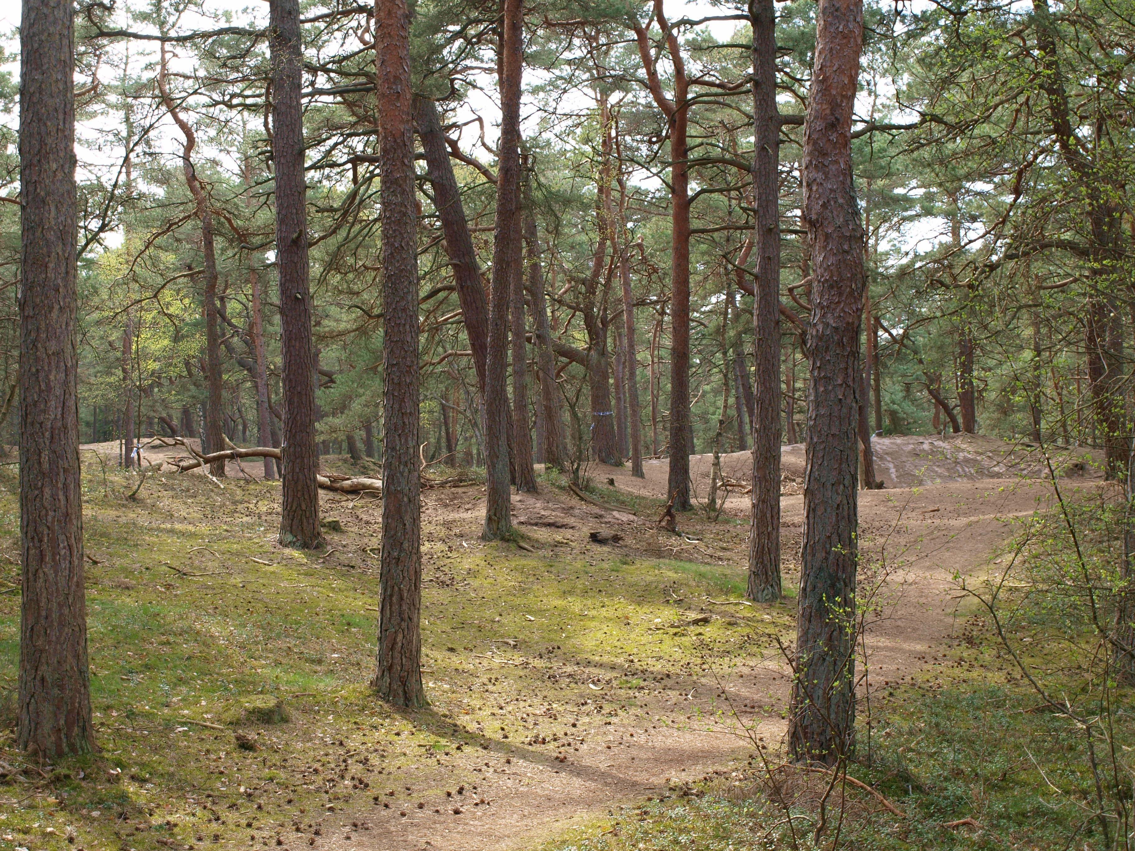 Ängelholms Strandskog