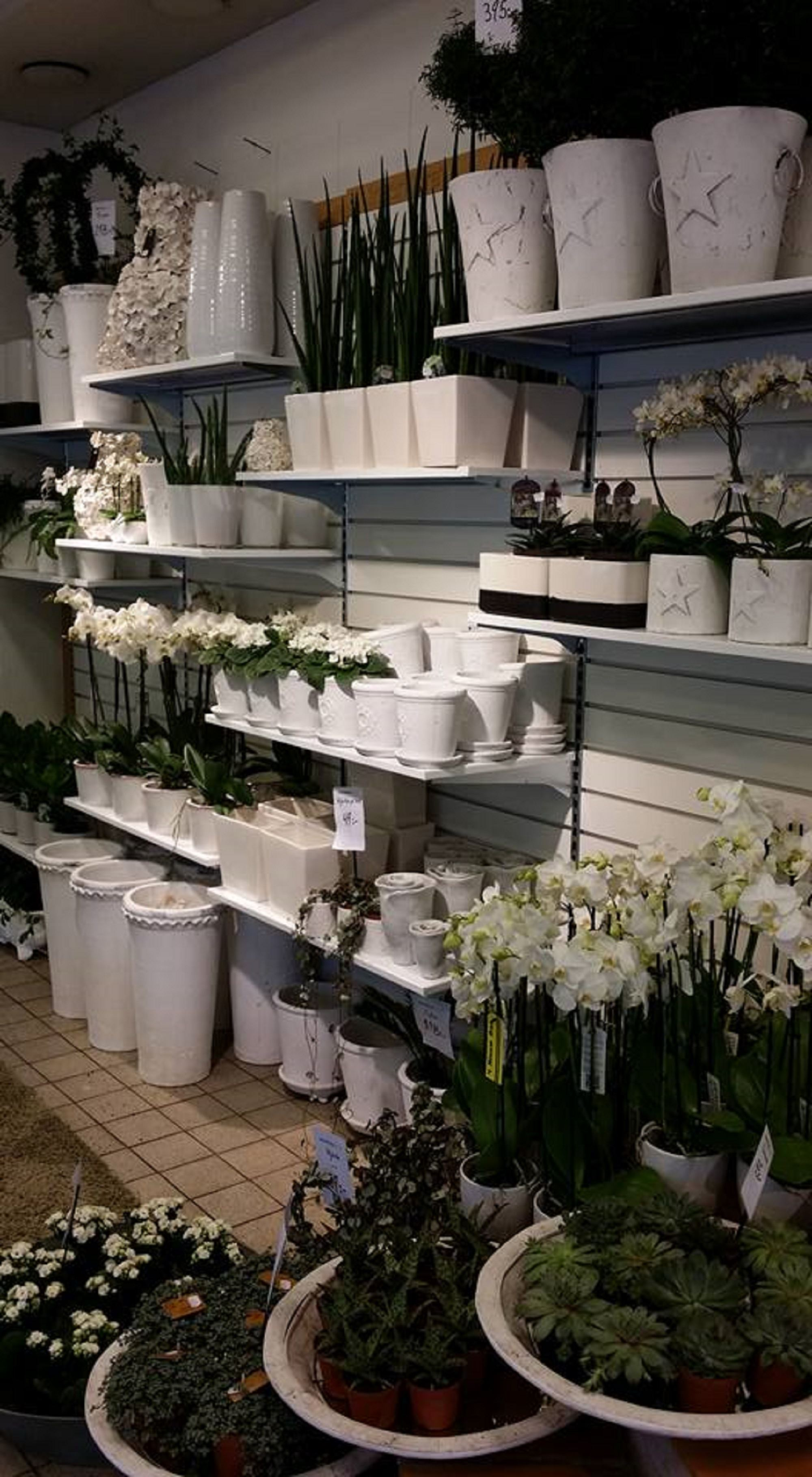 Interflora Fresh Bellis Blomsterhandel