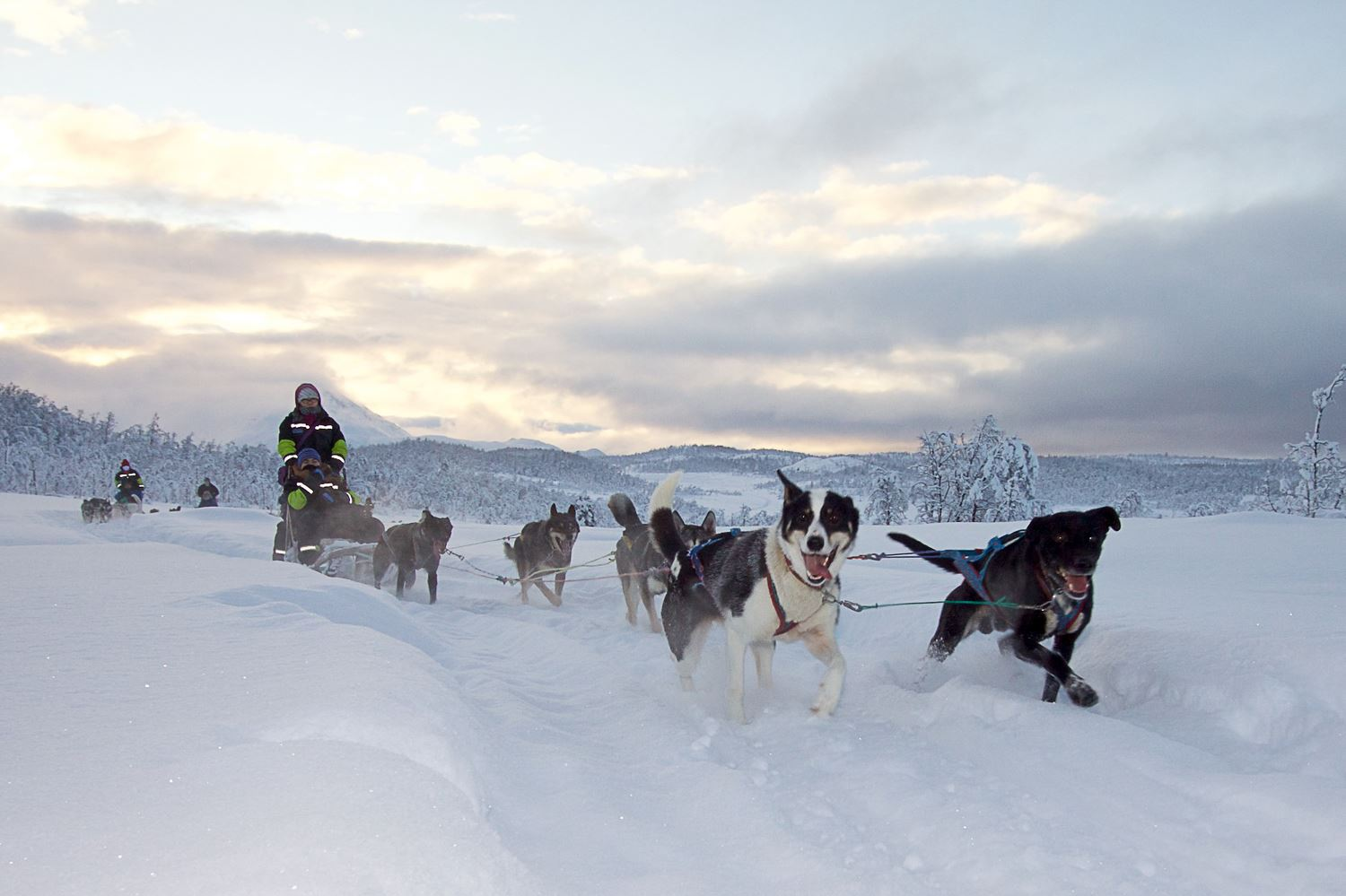Dogsledding via Lyngen Havfiske
