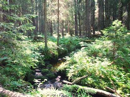 Basttjärnsrönningen - naturreservat