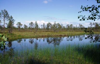 Länsstyrelsen Gävleborg,  © Länsstyrelsen Gävleborg, Bodmyran - naturreservat