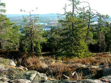 länsstyrelsen gävleborg,  © länsstyrelsen gävleborg, Älvåsen - naturreservat