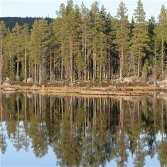 Jämtgavelns naturreservat
