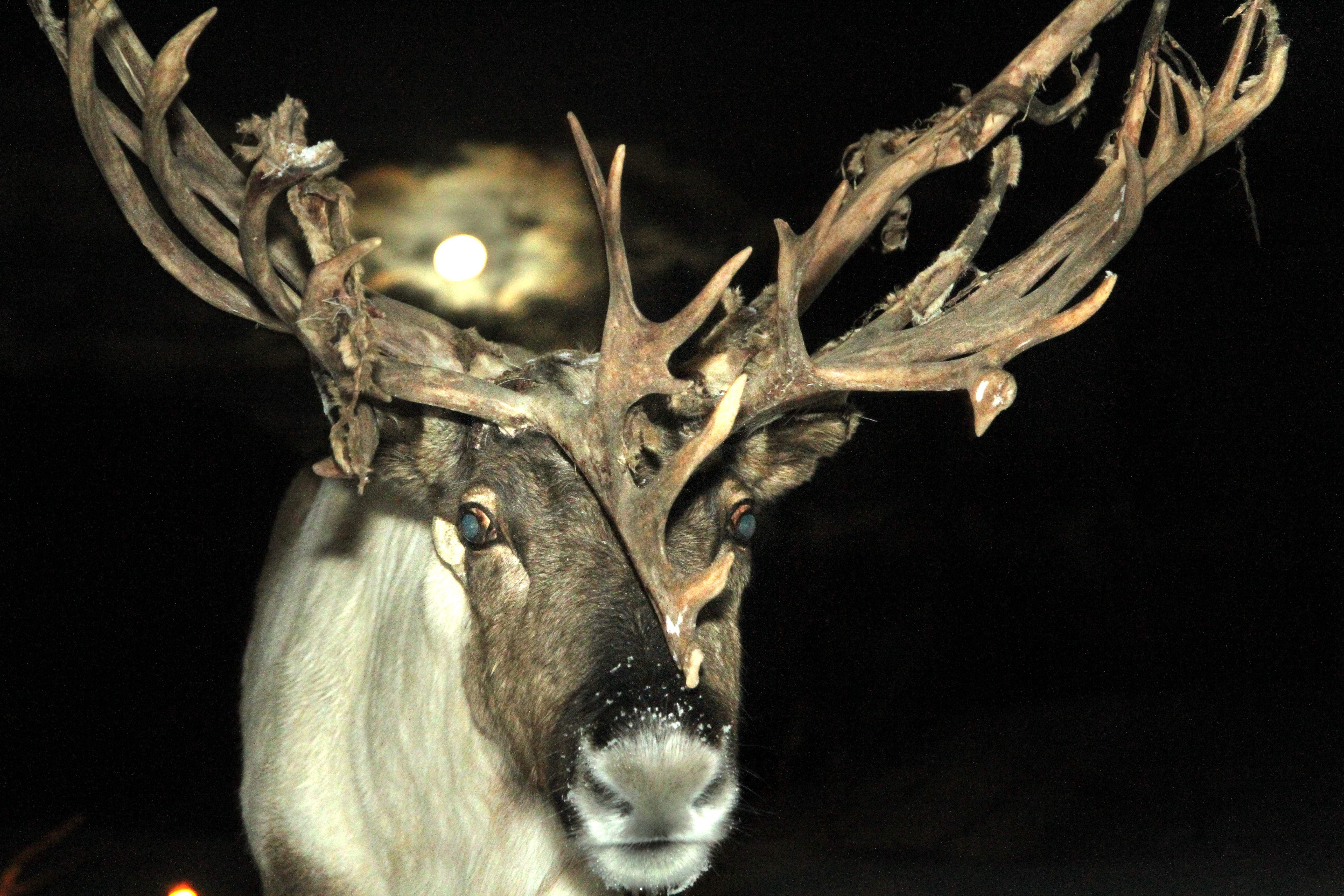 Snowman – Feed the Reindeer – Destination Snowman
