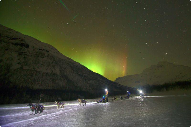 Nordlysjakt på hundesledetur - Lyngsfjord Adventure