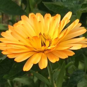 Flower in the garden.