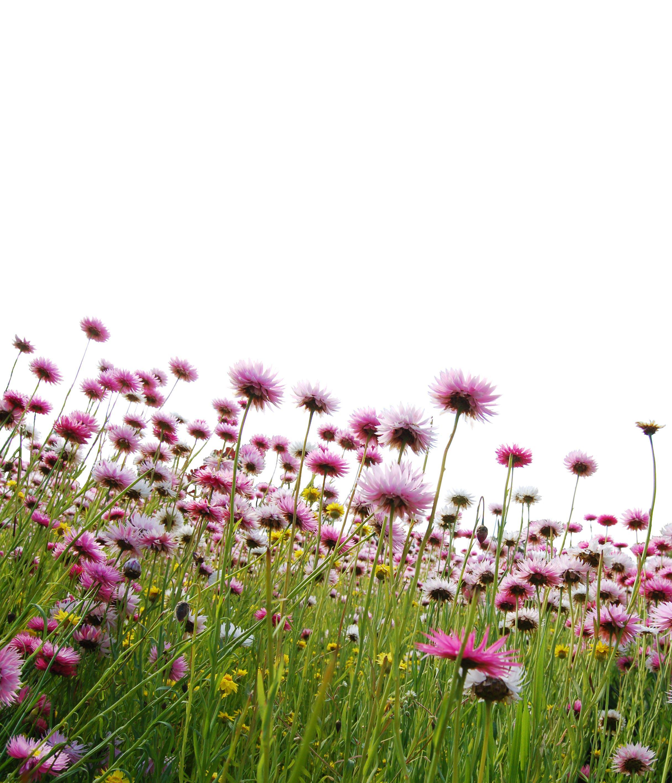 Trädgårdsloppis