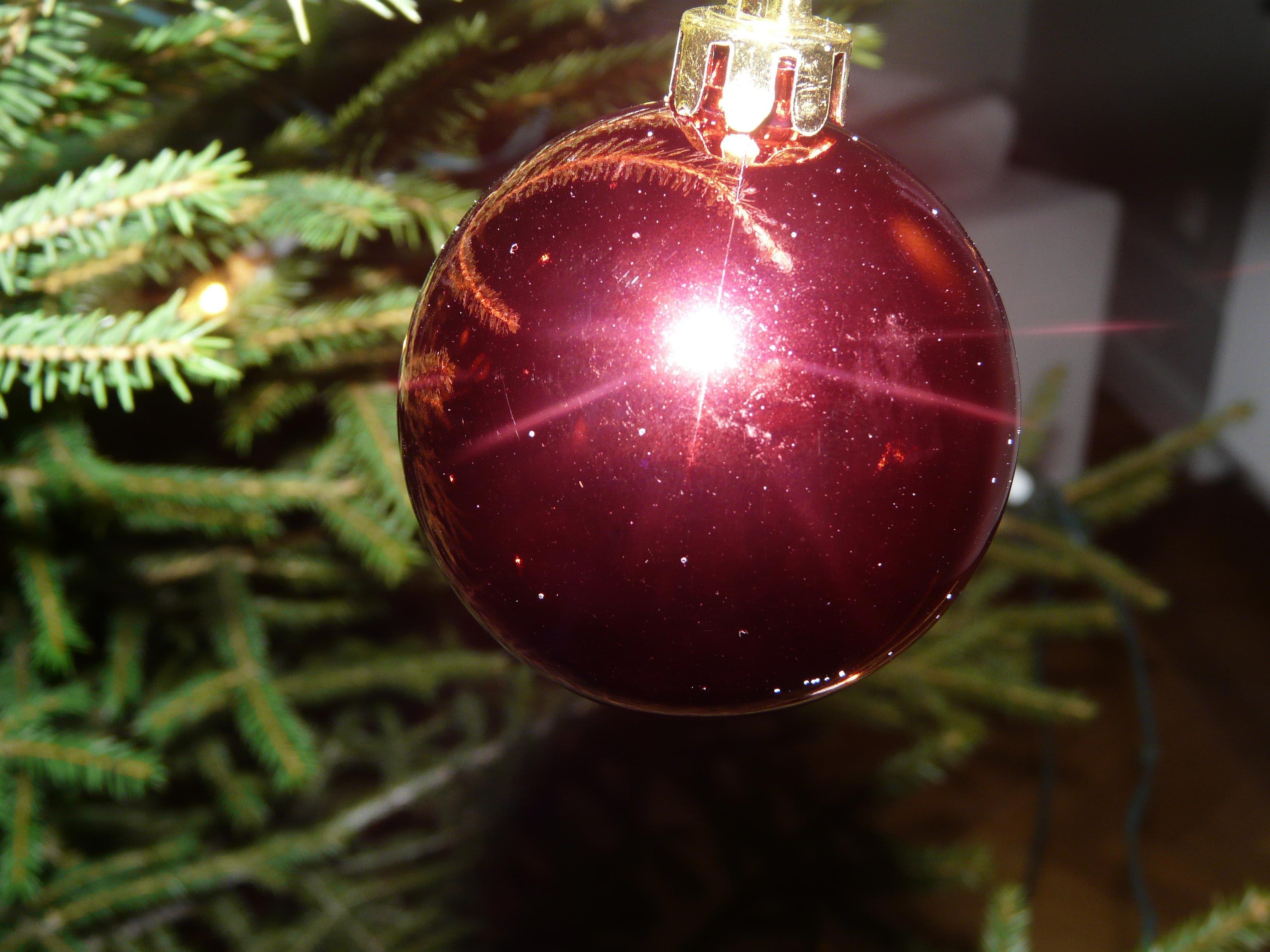 Julgransplundring på Rättviksparken