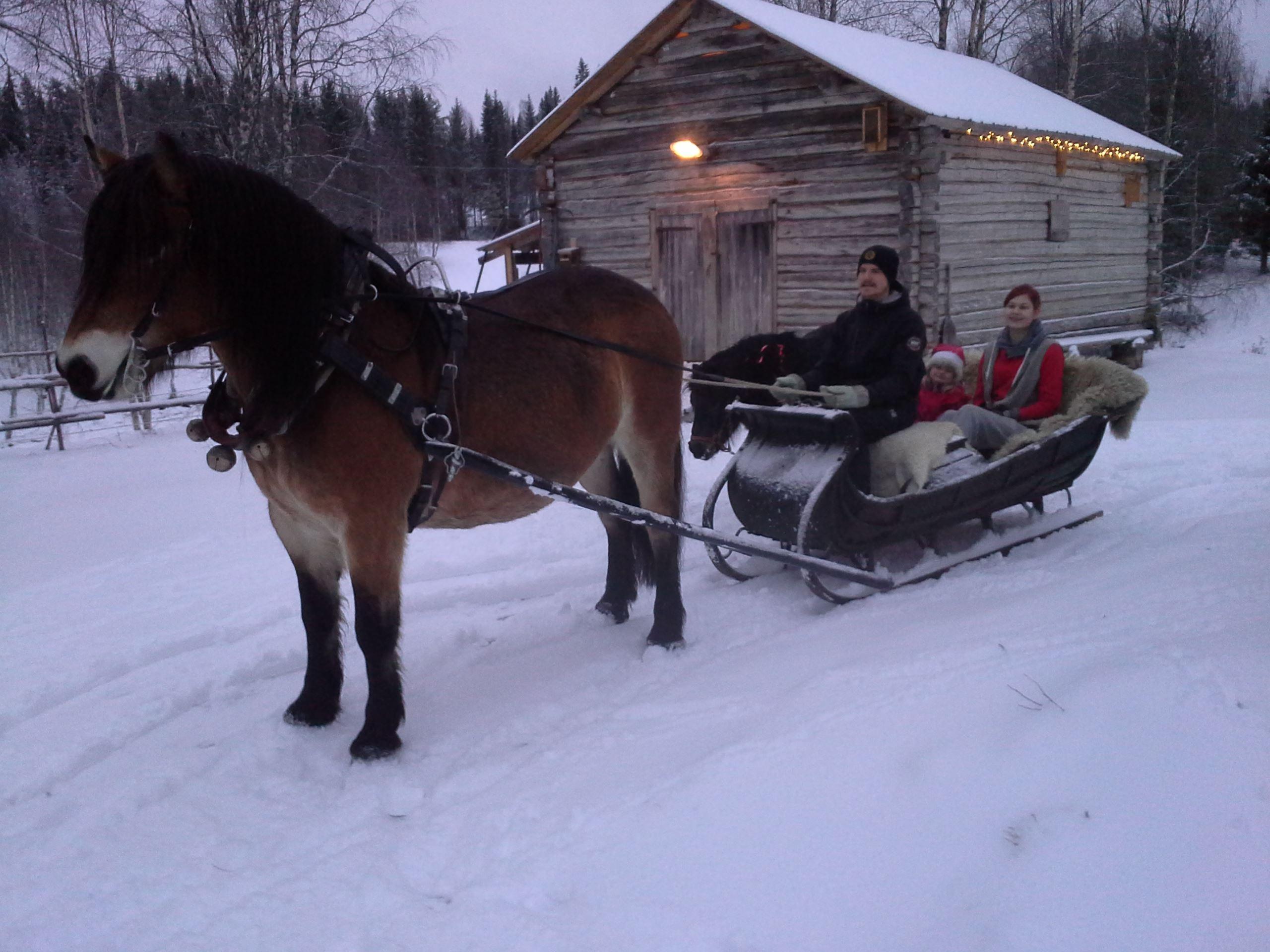 © Backfors Gård, Nordlichter vom Pferdeschlitten aus erleben