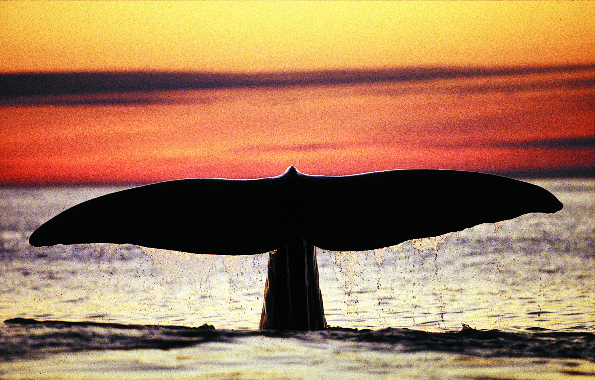Safari balene da Andenes (estate - con barca grande)