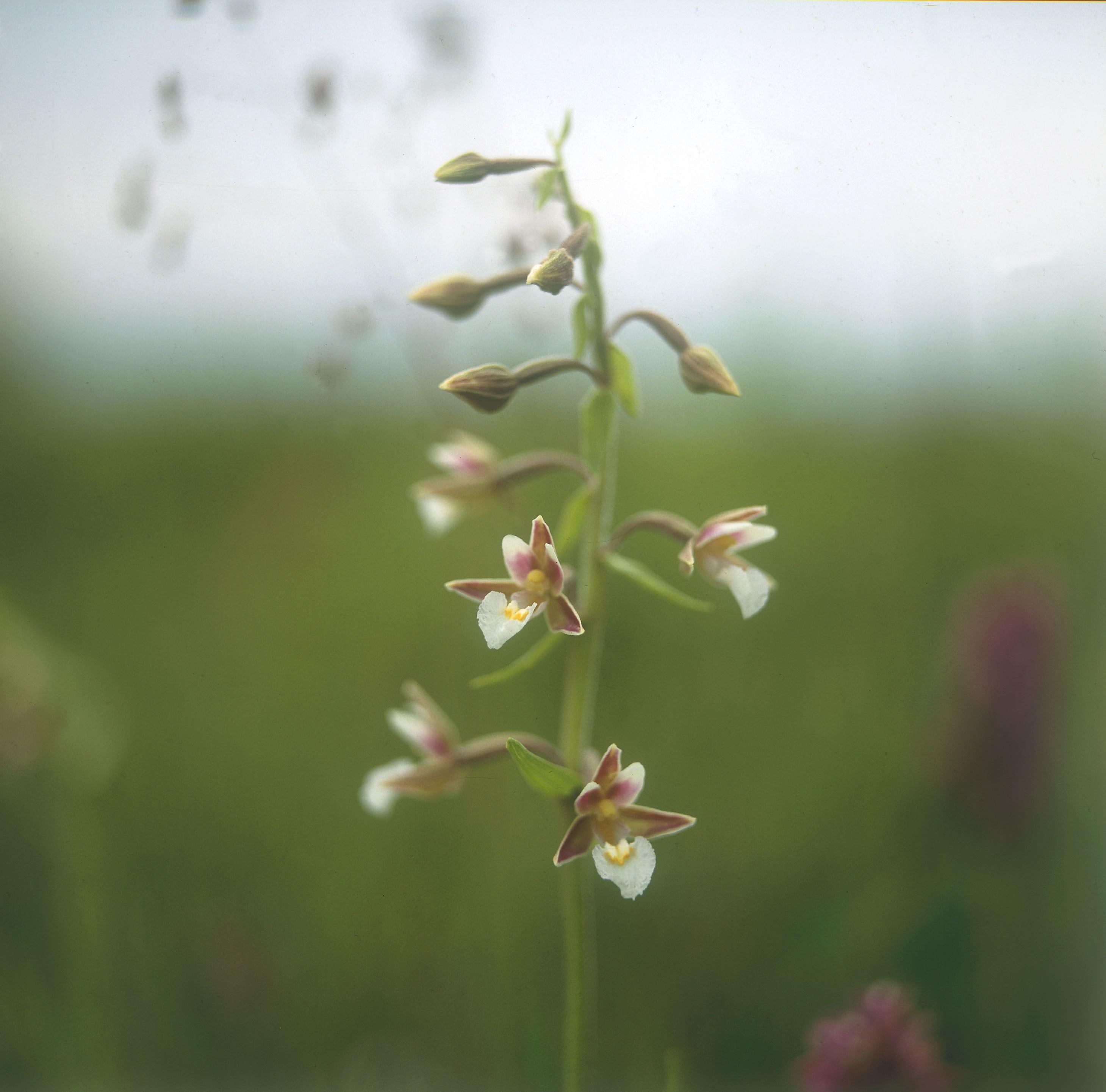 Lindreservatet - ängar och blommande lind.