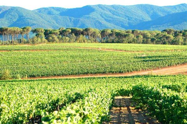 Excursion oenologique en Côtes de Provence Sainte-Victoire