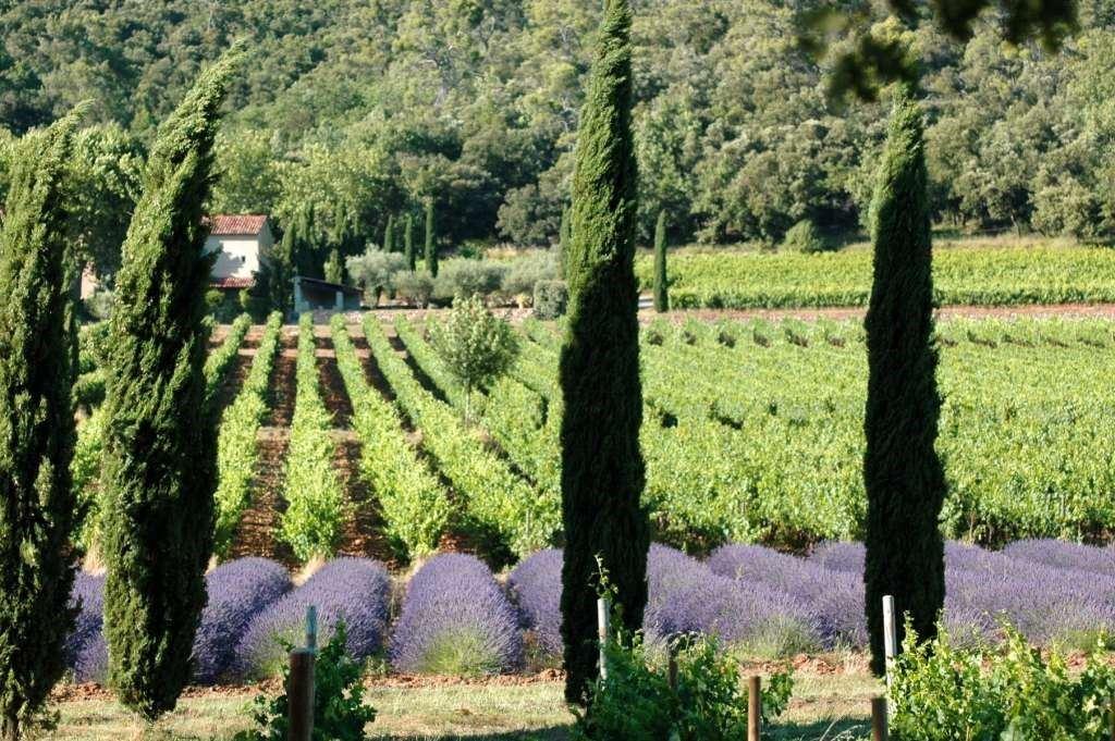 Excursion oenologique journée autour du Luberon