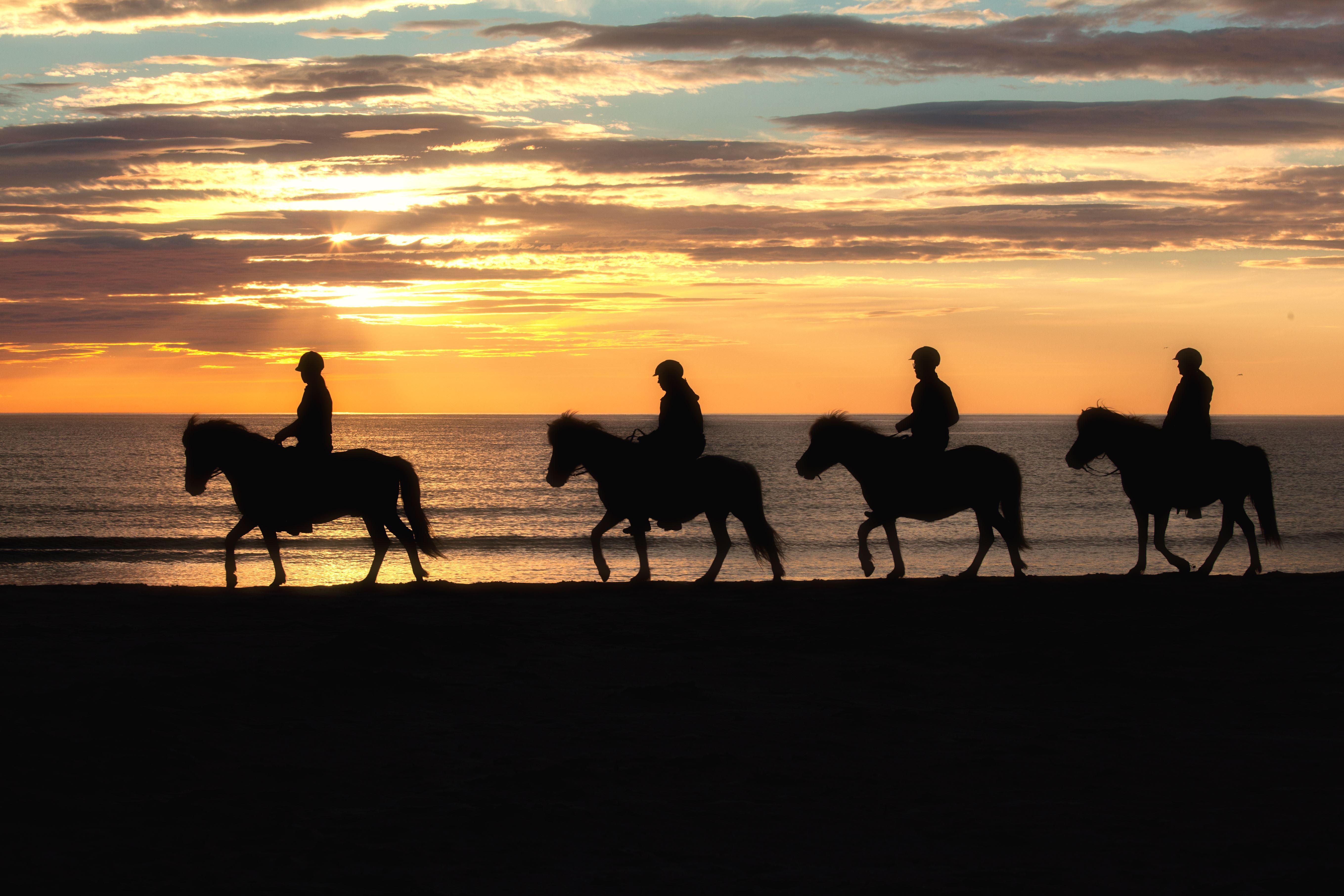 Horseback riding under the Midnight Sun in Lofoten