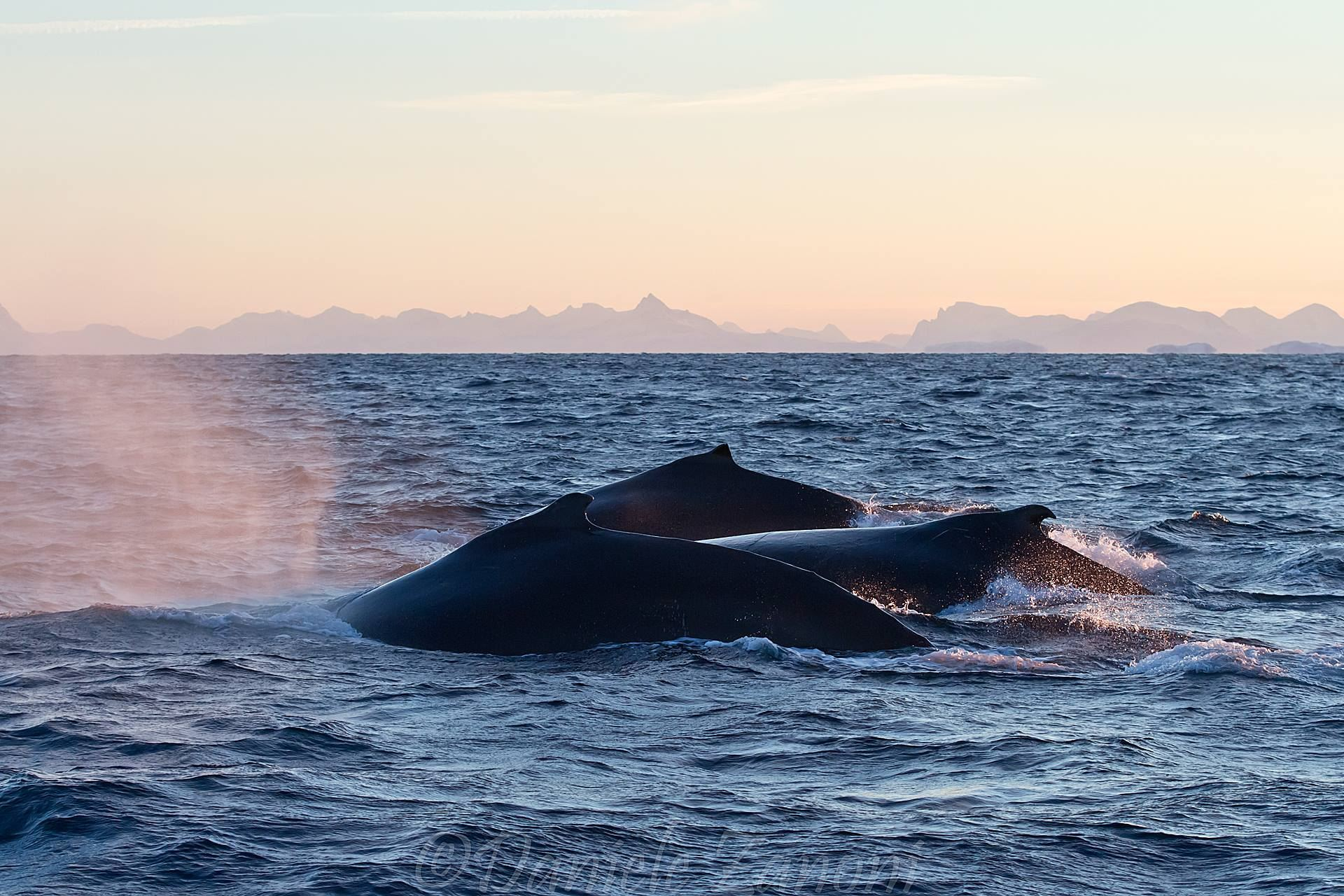 Winter Whale Safari from Andenes (big boat)