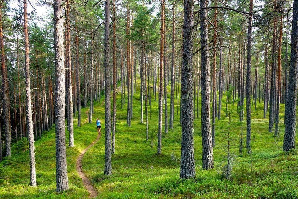 Mora Trail - Terränglöpningstävling