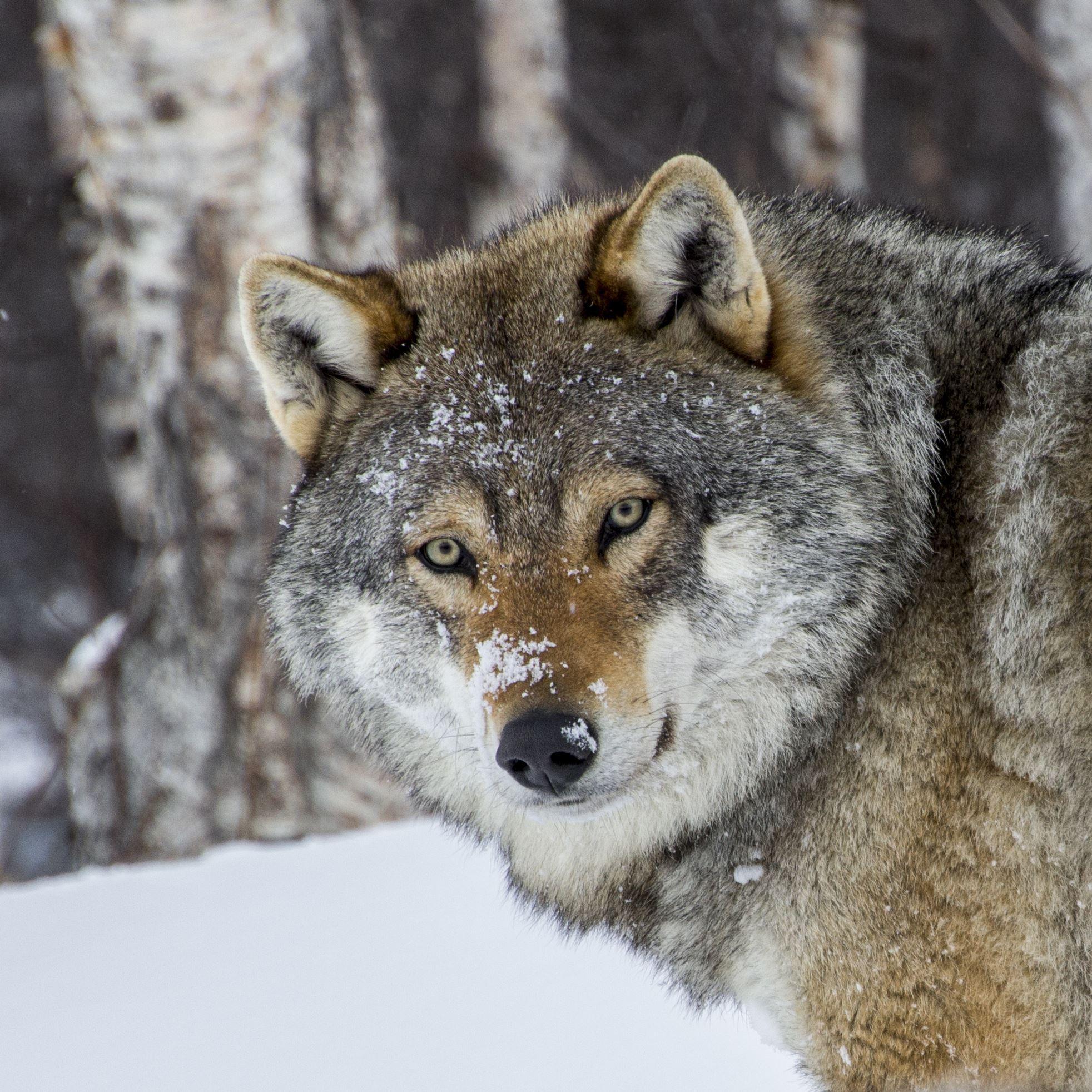 © Polar Park, Besøk på Polar Park med overnatting på Fjellkysten inkludert transport