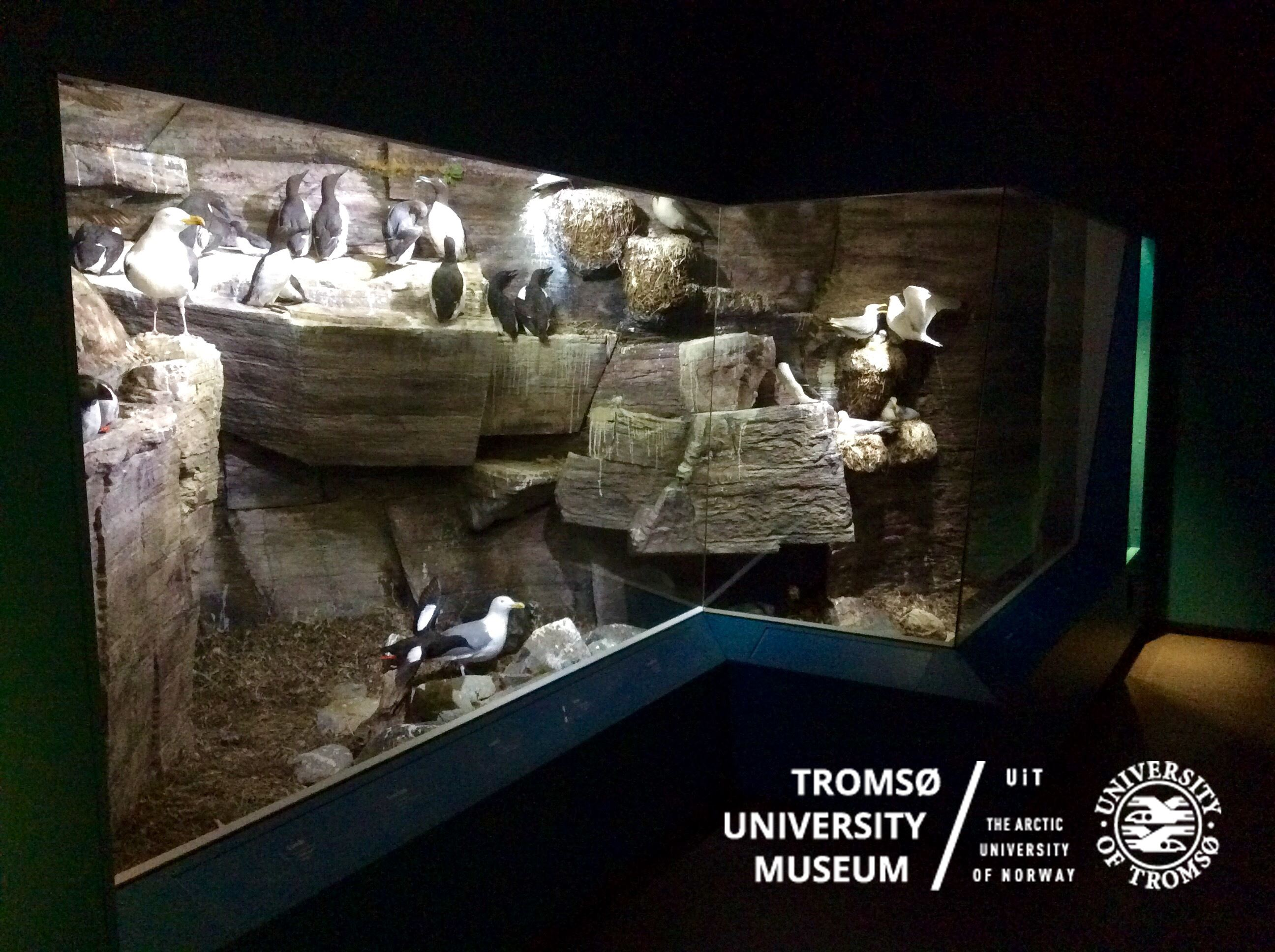 Sea birds, Seals and Museum visit – included Zodiac tour–Summer - Tromsø Friluftsenter