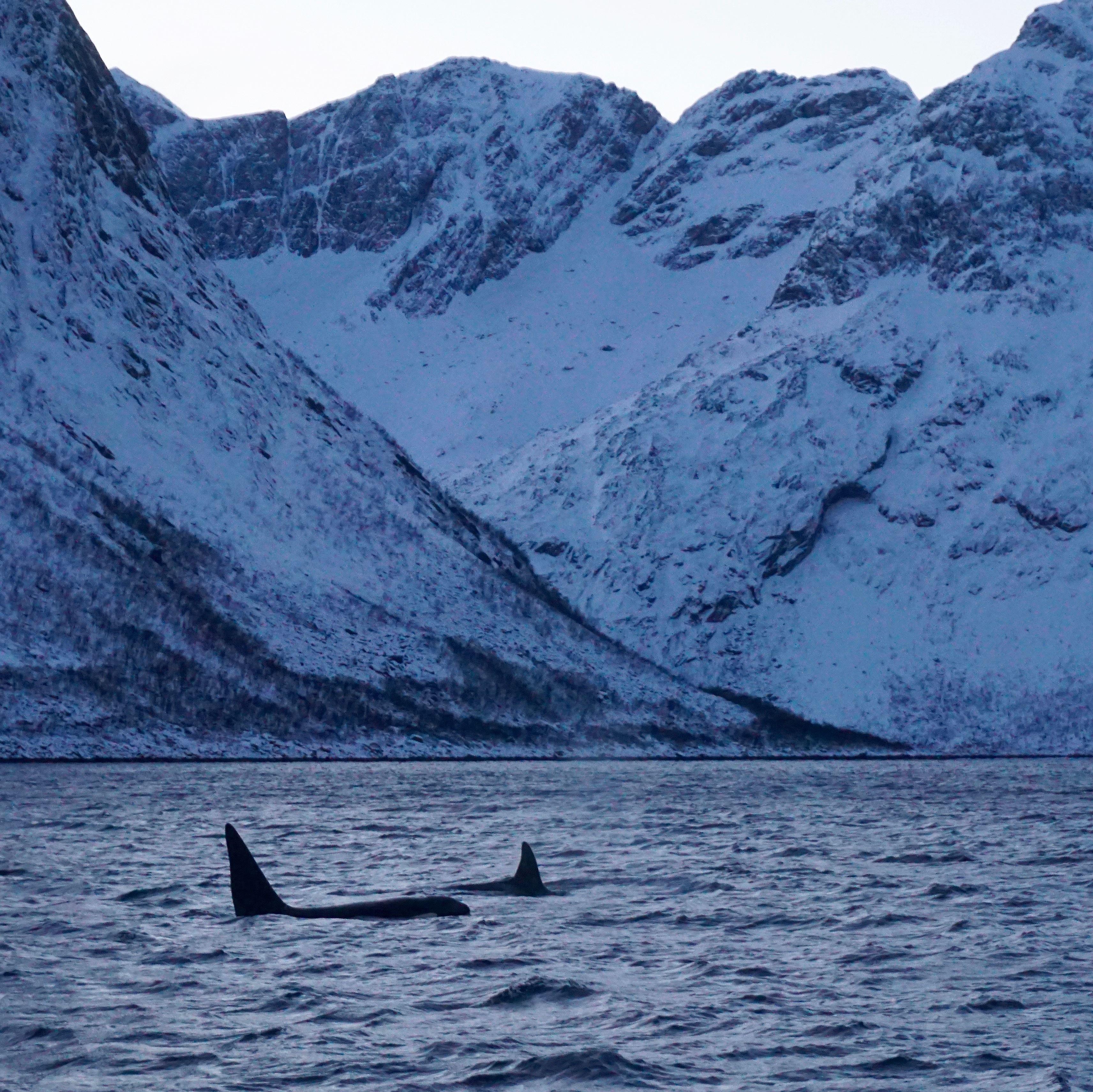 Whale Research Safari - Wild Seas