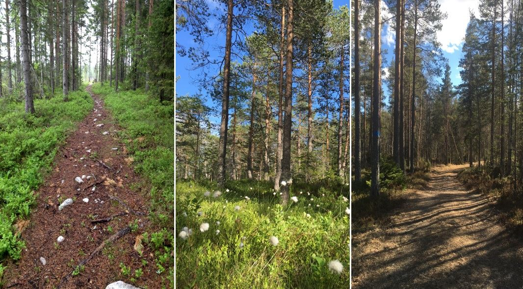 Sundsvall Ultra Trail
