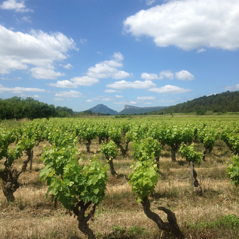 Alrededor de las viñas del Pico Saint Loup – Instant Terroir