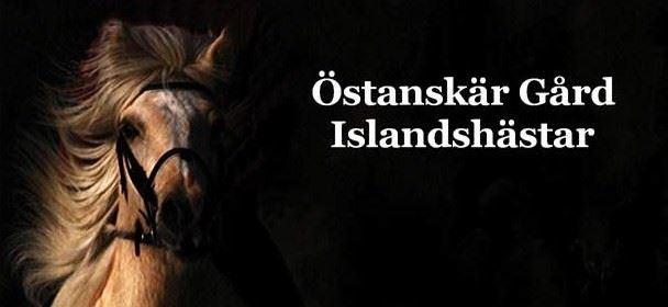 Östanskär Farm Icelandic Horses.