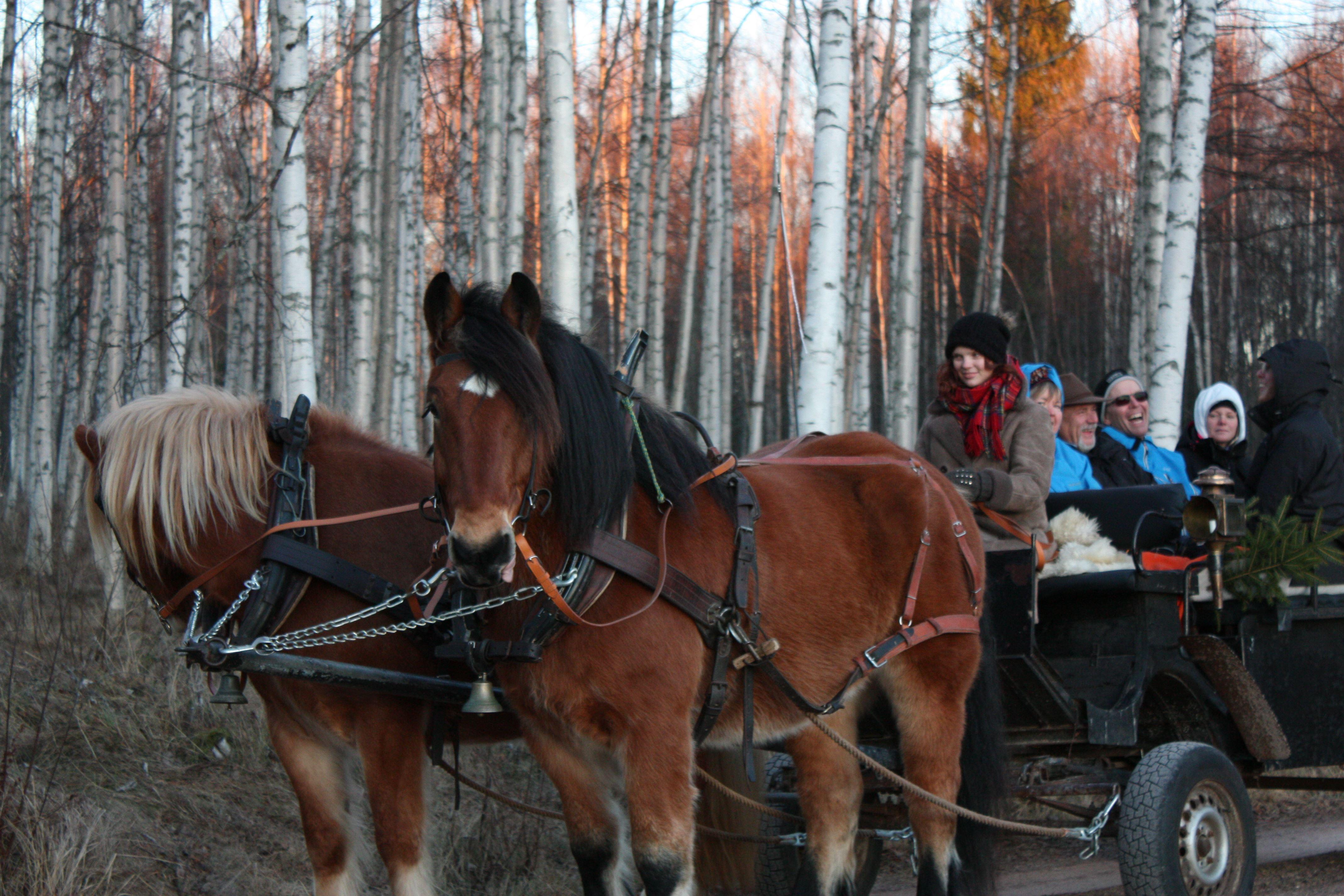 Dagstur med häst och vagn/släde