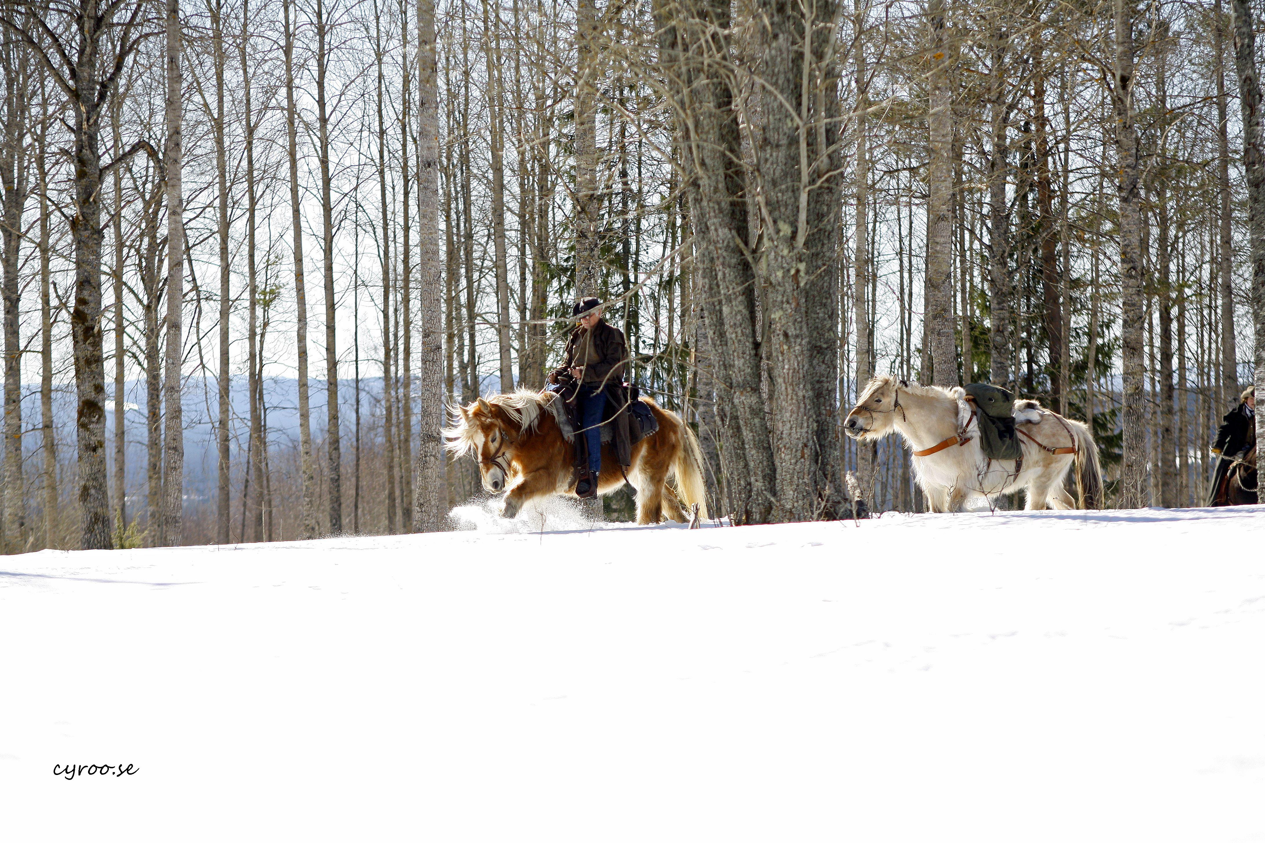 Vinterridning - Silverhill Stable