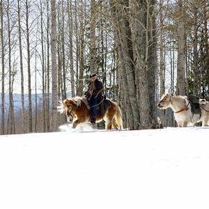 Vinterridning westernstyle - Silverhill Stable