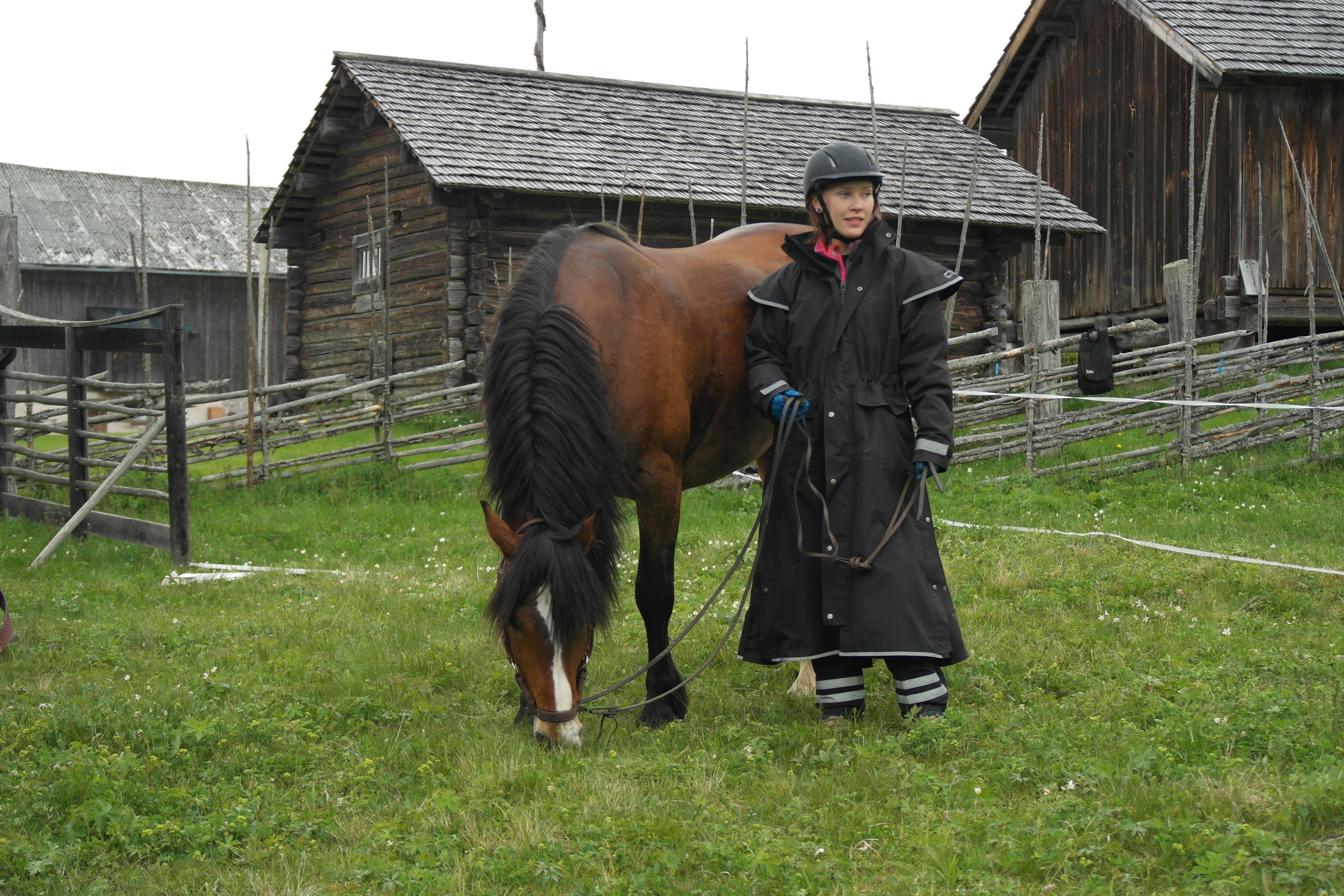 Try out horse riding Western style - Silverhill Stable
