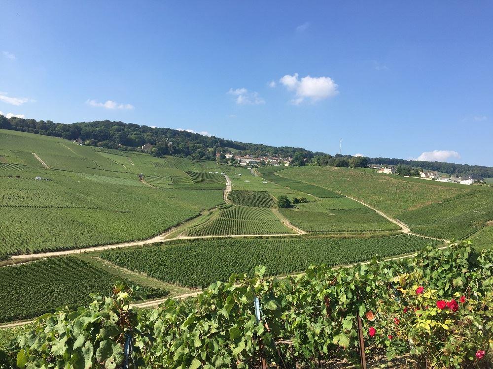 Oenotourism in Champagne