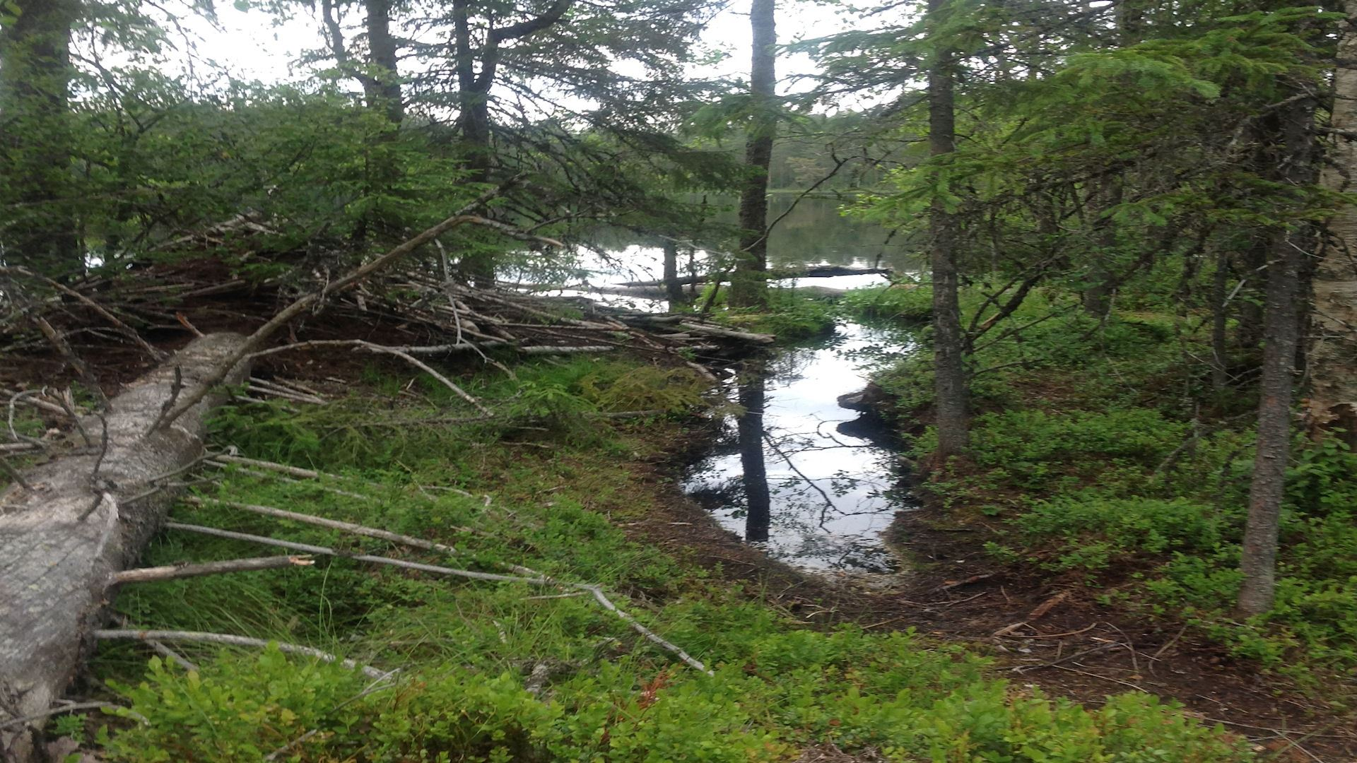 Combined canoeing and hiking trip to the beavers' territory with friends or family