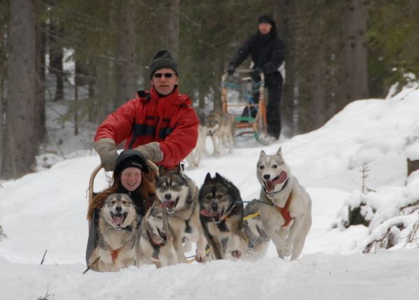 Husky safari vacation in Kullasmarina, 2 days