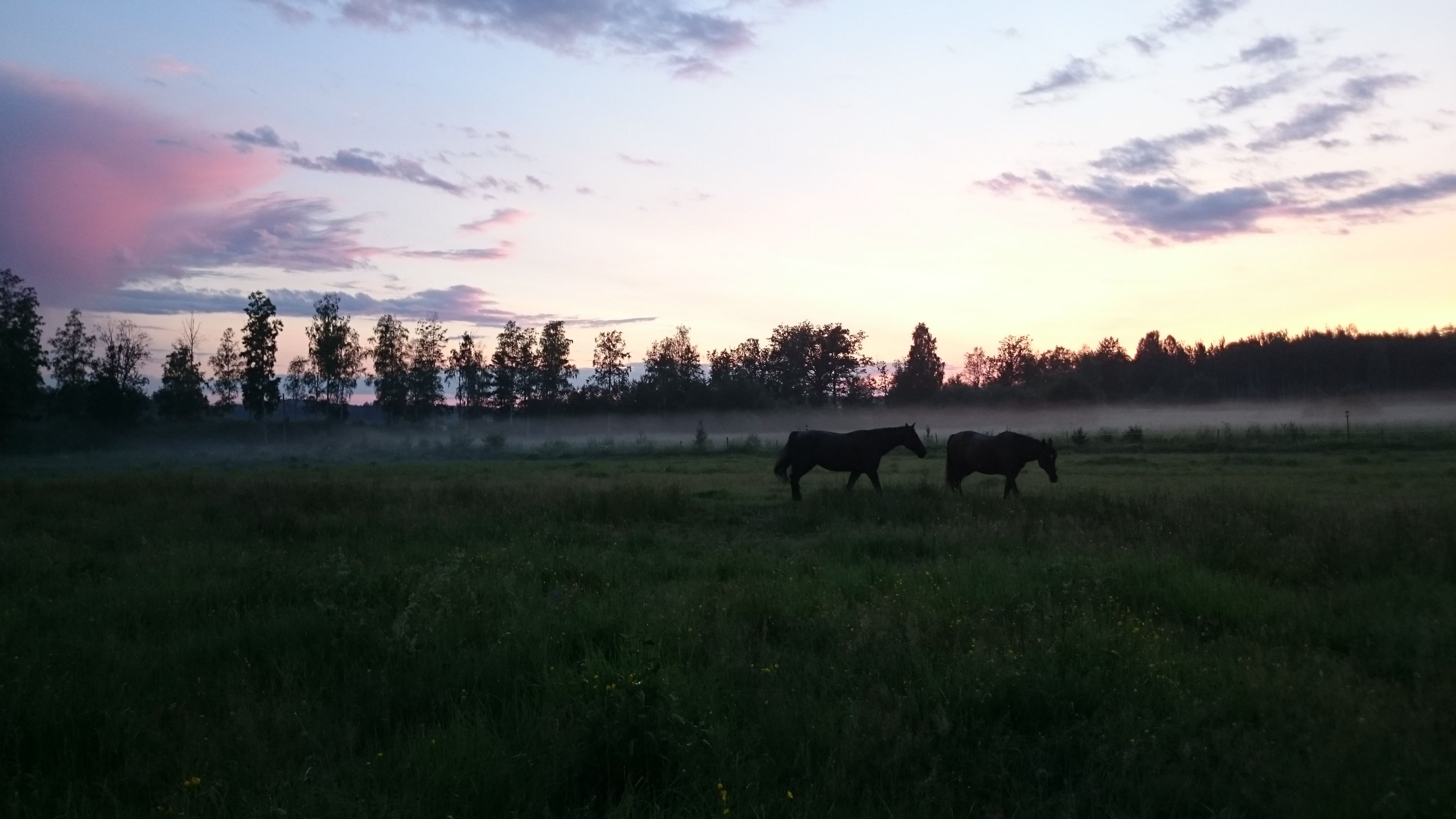 Healing genom hästar (equine therapy)